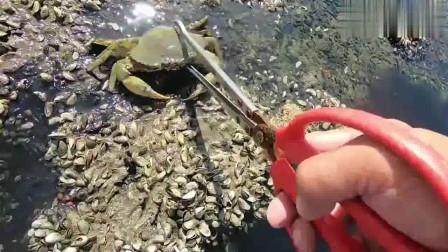 赶海发现这里一直吐泡,掀开下面一看竟是大螃蟹