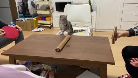 可以和猫咪一起玩下去,就知道这些人有多无聊了