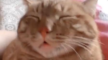 沙雕猫咪合集,莫名戳中我今天全部笑点哈哈