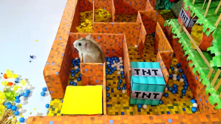 我的世界动画-小仓鼠闯迷宫-Hamster TV