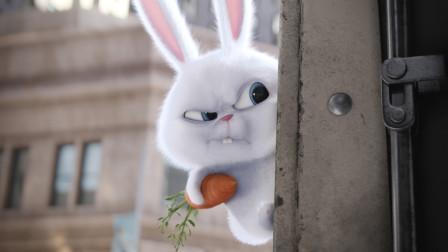 一只看似可爱的兔子,真正的身份却是黑帮老大