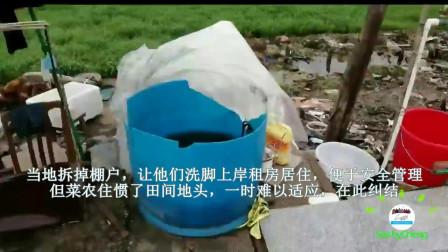 广西农民在珠江三角洲种菜的烦恼