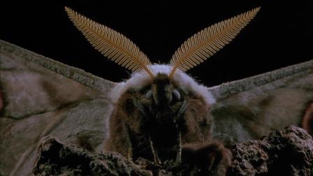 微观世界 :小蝙蝠也出来了