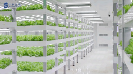 中科三安植物工厂,智慧农业,无土栽培,为复杂室内园艺提供简单解决方案