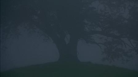微观世界 :清晨的大地雾蒙蒙的