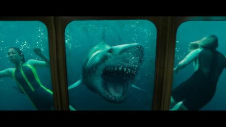 【鲨海逃生】恐怖惊悚片 电影推荐