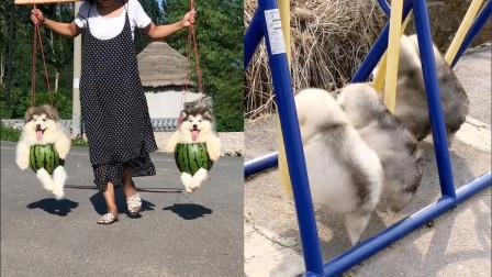 这也太萌了吧!呆萌可爱的小短腿狗狗,走起路来太好笑了!