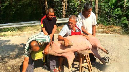 广西农村人杀年猪,200多斤大肥猪,养了一年多,没三四个人还真不行