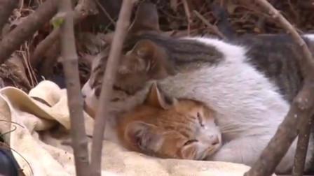 流浪猫,你明知是陷阱仍义无反顾爬到它身边那一瞬间,我泪目,也羡慕了