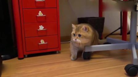 猫咪看医生,橘猫打完了针再看到医生直往后躲,小样太可爱了