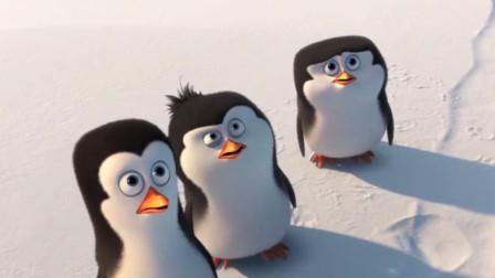 【科学嬉游记】小动物和它们的父母像不像——马达加斯加的企鹅