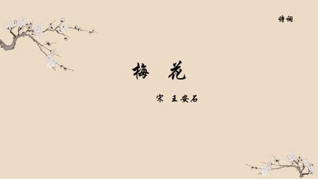 古诗词朗读《梅花》王安石 遥知不是雪,为有暗香来  小学古诗词