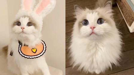 萌出新境界啊!因颜值太高爆红网络的猫咪,猛男们的最爱啊!