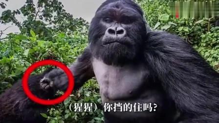 猩猩的拳头有多厉害,一拳把保护罩打裂。几十的功力不是吹的