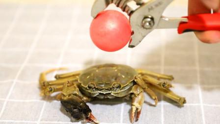 烧热到1000℃的铁球,能不能煮熟螃蟹,小伙亲测后被惊到了!