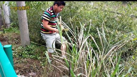 与朋友一起在美丽的山边水竹林拌水竹笋