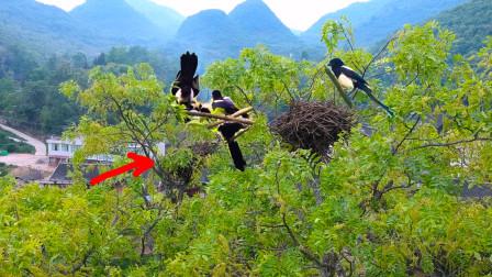 小伙航拍发现一只大鸟窝,上面还有这种大鸟,现在很少看见了