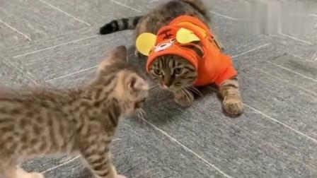 刚给大猫穿上衣服,小猫就不认识了,连妈妈都敢打!