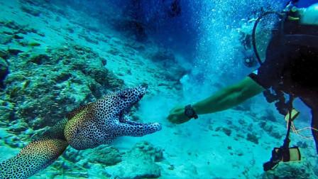 """国外小哥在潜水,发现巨型""""不明生物"""",伸手一抓差点中招!"""