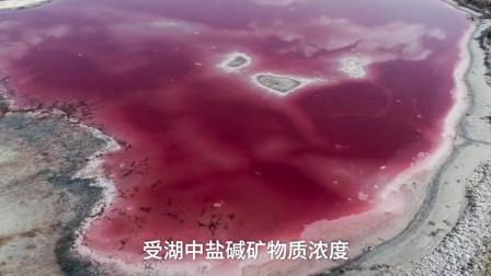 最佳观赏季!内蒙古阿拉善现绝美双色湖,紫蓝相伴如宝石!
