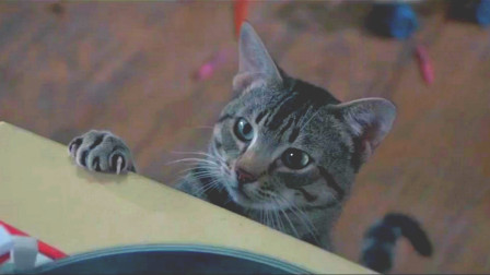 女孩期将至却一直活着,只因她捡的猫咪,每晚与怪兽做斗争