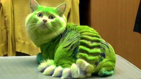 8个世界上最昂贵的猫咪!