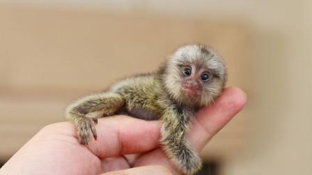 5个世界上最小的动物!