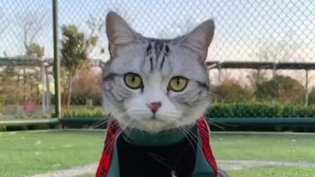 萌宠:分享泡芙猫咪诸多的第一次!看不出她还有多重面孔呢!