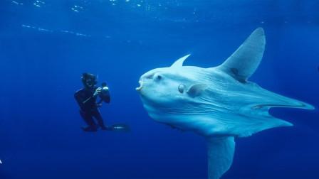 """海洋最深处""""马里亚纳大海沟"""",科学家找到了什么?"""