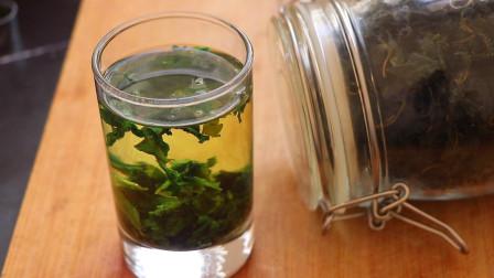 新鲜桑叶营养好吃,还能做成茶,带你们见识桑叶茶制作流程
