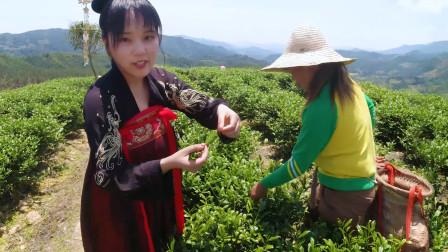 福建农村茶园采茶了,采茶女现场传授秘诀,一天能采40斤!