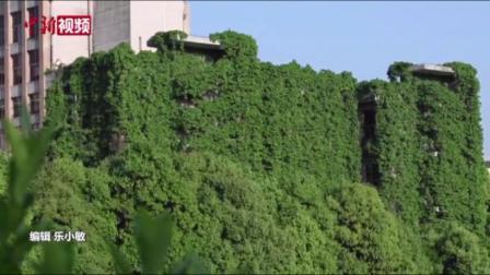 """爬山虎""""围楼""""28年 9层楼高图书馆如""""绿色瀑布"""""""