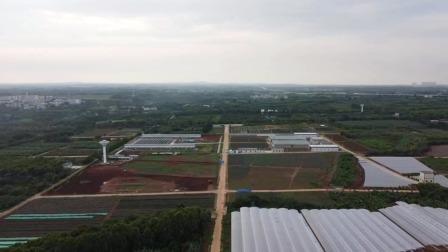 航拍广东湛江中国热带农业科学院湛江地区实验基地