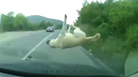 刹车已经来不及了,希望狗子能够没事
