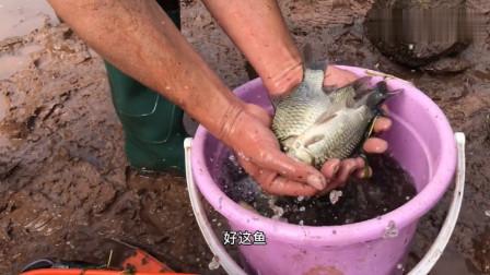 四川大哥带会计抽水抓鱼, 资源真好,几小时整到几十斤,收获的野生鲫鱼都分享村民