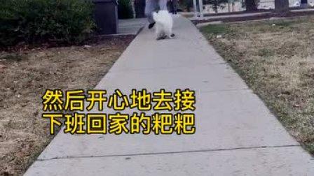 把狗独自放店门口会怎样