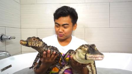 歪果仁作死新挑战,和4条鳄鱼一起泡澡!仔细一看别有玄机
