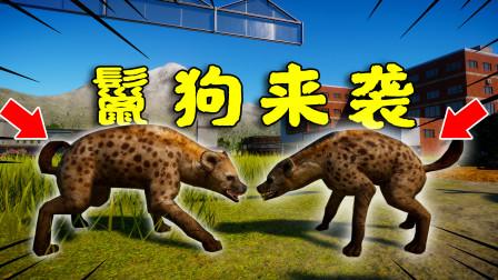 动物园之星36:鬣狗来袭,把之前的主人吃穷后,逃难过来的