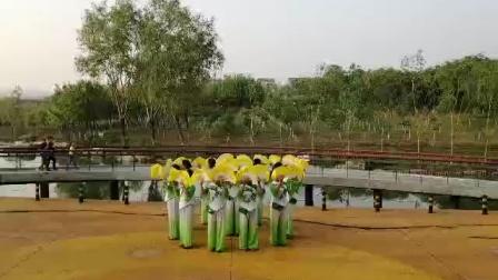 《桃杏花开太行山》森林公园拍摄