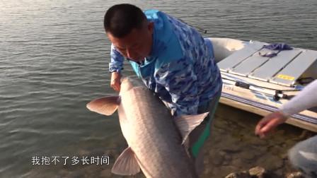 清江边钓上一米多长的大青鱼,圆滚滚的像小猪一样!