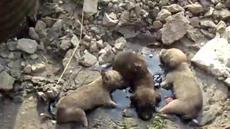 三只被焦油粘住的流浪狗被妈妈狠心抛弃幸运遇到好心人