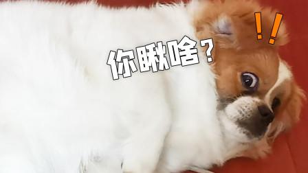 我很骄傲我救了它一命:超级小朱的宠物搞笑vlog
