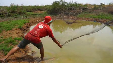 野外大水坑,大叔连撒了三四网,网网都有大收获,看看是啥鱼?