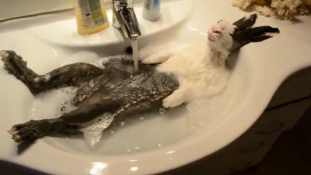 盘点各种小动物洗澡的姿势,感觉都成精了,真会享受!