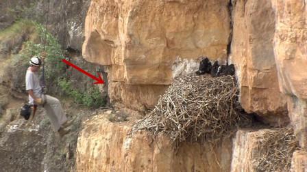 生活在4000米悬崖上的金雕科学家如何研究趁大的不在偷小的