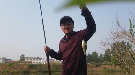 华子用11米鱼竿去小河野钓,长竿短线七星漂,鲫鱼连竿上钩可爽了