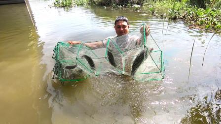 桥墩下的水塘野鱼乱窜,阿彬往地笼丢进老鸭肠,拉上来后满是惊喜
