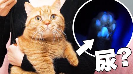 猫咪发情乱尿,逼得主人拿出绝招,猫:这是要断我的后?