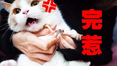 答应我!千万别一次给六只猫剪指甲,你会后悔的