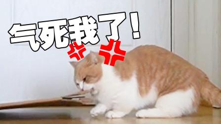 """如何逼""""疯"""" 一只猫?"""